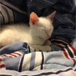 Meet Mr. Meow