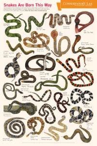 SnakePoster_Final_1-300x450